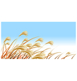 Grass Blades against Blue sky vector image