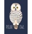 polar owl vector image