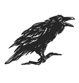 Screaming black crows vector image