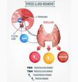 endocrine system image vector image