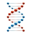 Deoxyribonucleic acid vector image vector image