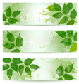 Three nature background with green spring leaves vector image vector image