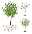 realistic green tree with roots vector image