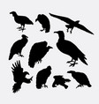 Condor vulture eagle and hawk bird silhouette vector image
