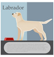 labrador colourful postcard vector image