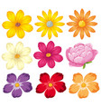 different kinds of colorful flowers vector image