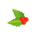 holly berry christmas symbol vector image
