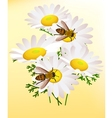 bee on chamomile vector image