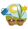 growing daffodil vector image