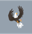 north american bald eagle flying and attacking vector image