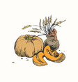 still life with pumpkin and jug with wheat vector image