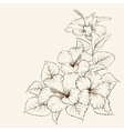 Flower of mallow vector image vector image