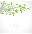 Background with branch and green leaves vector image