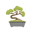 Bonsai japanese tree vector image