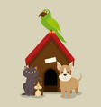 set of home animals pets vector image