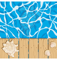 Marine background with water shells turtle vector image