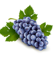 Ripe grapes with leaf vector image vector image