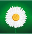 chamomile flower camomile daisy wheel daisy vector image