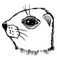 gopher vector image