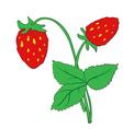 The bush of ripe strawberries vector image vector image