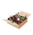 Fresh Purple Mangosteens in A Shipping Box vector image vector image