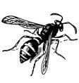 wasp odynerus vector image vector image