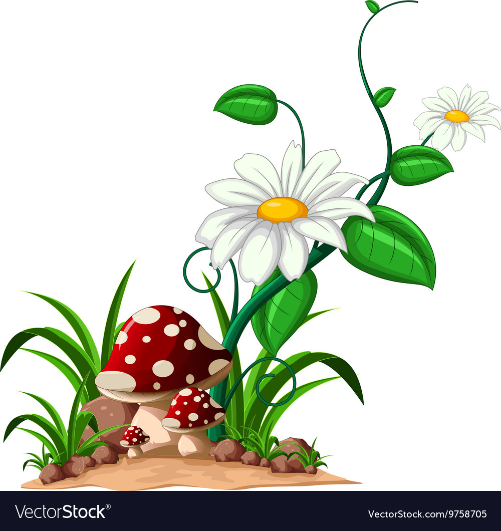 Mushrooms in the garden vector