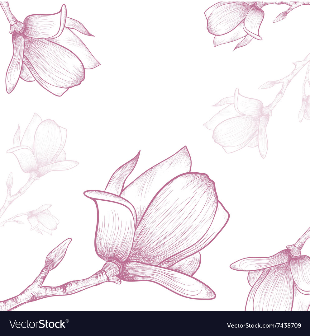 Magnolia flower vector