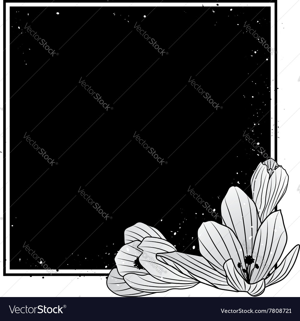 Frame with flowers of crocus vector