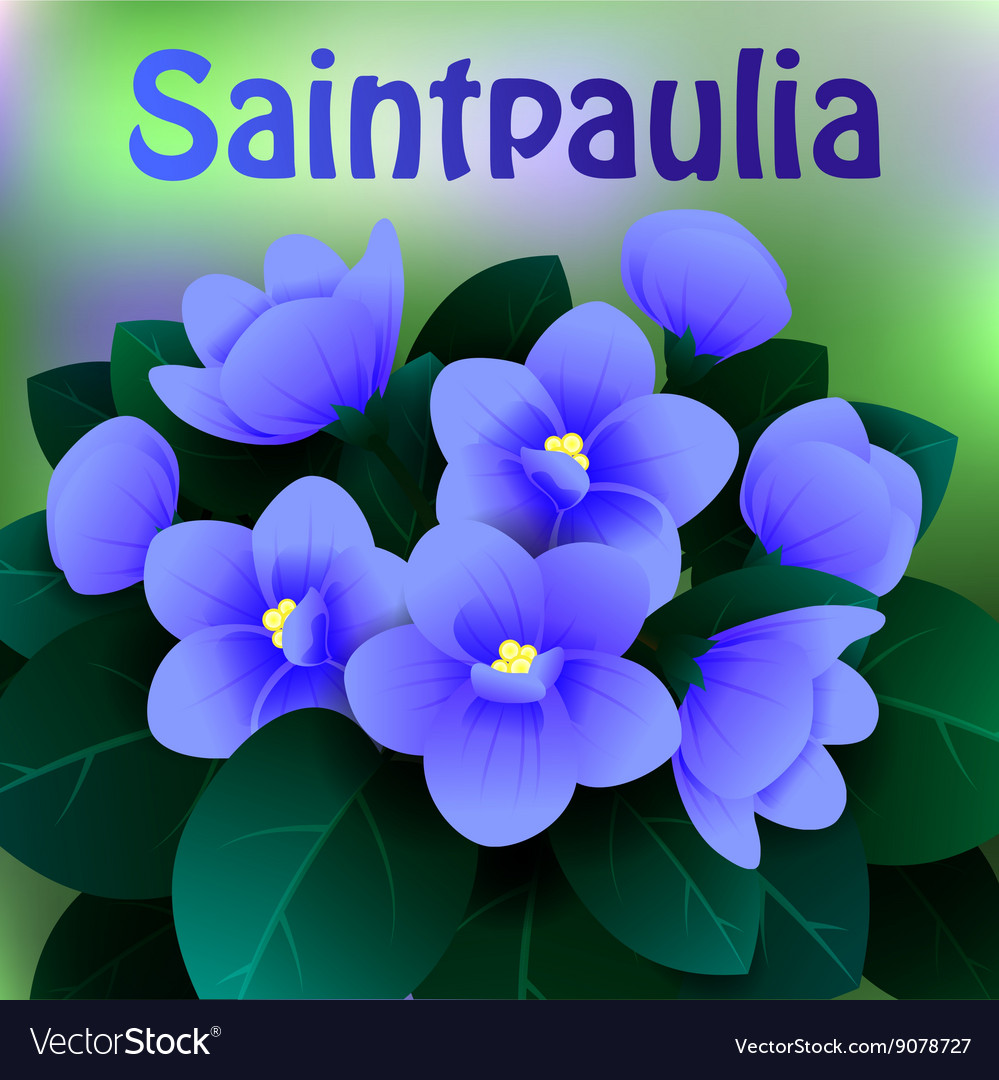 Beautiful spring flowers saintpaulia cards or vector