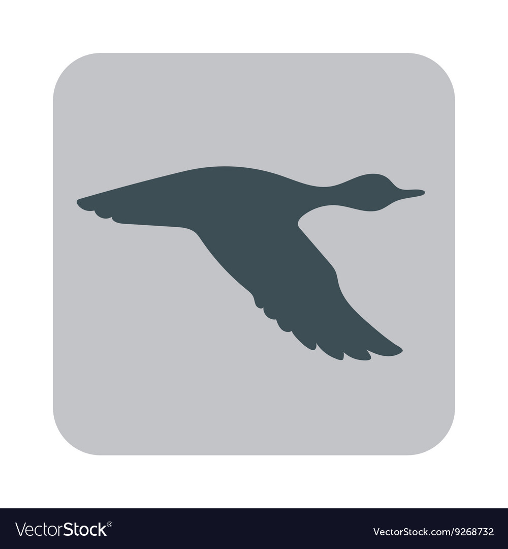 Silhouette flying duck vector