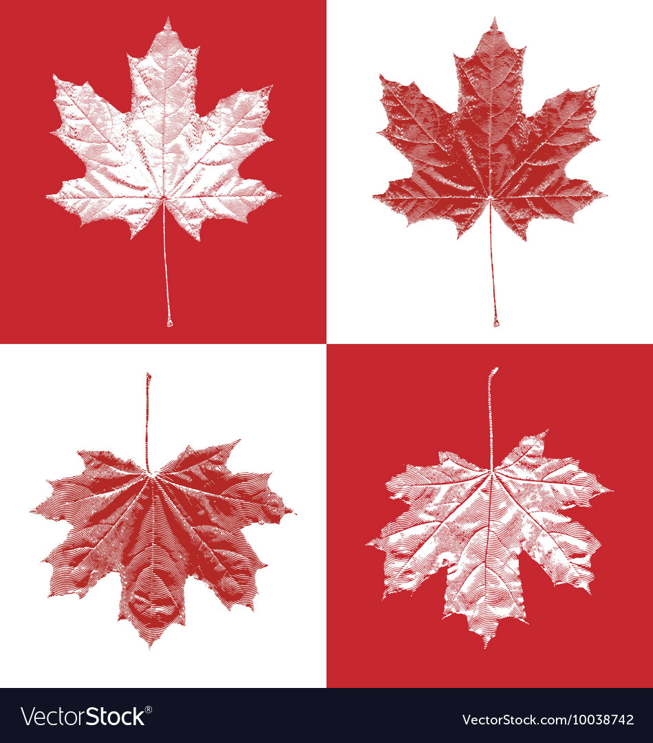 Canada vintage maple leaf set vector