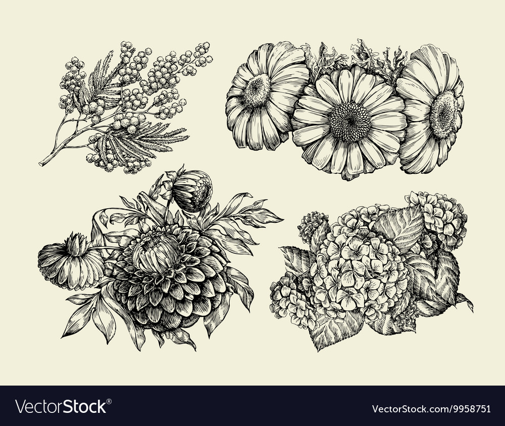 Flowers hand drawn sketch of chamomile mimosa vector