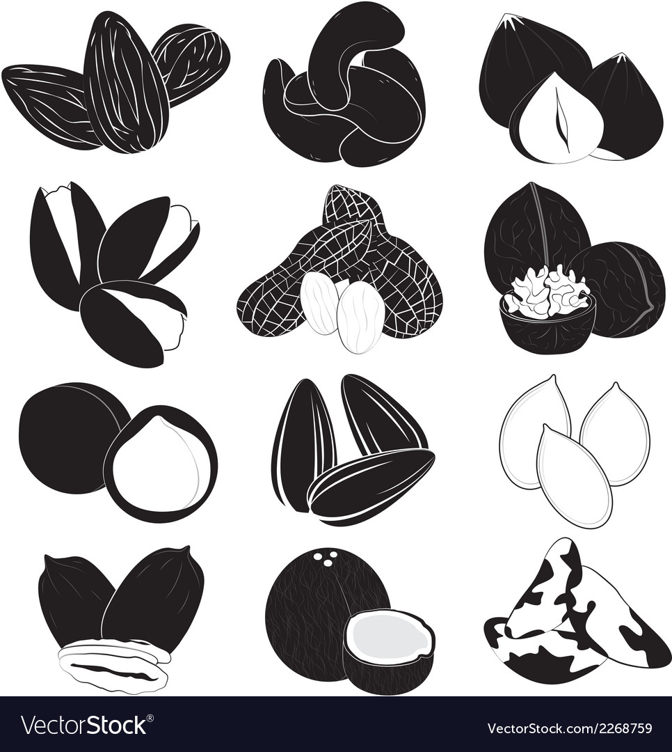 Edible nuts collection vector