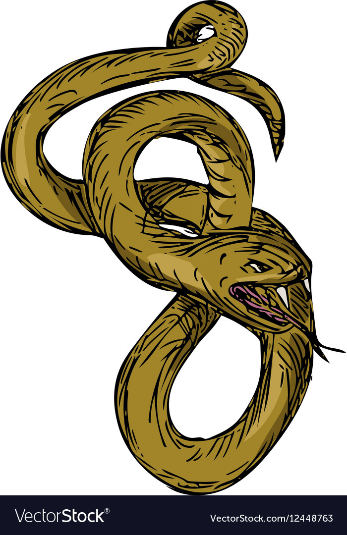 Viper coiled ready to pounce drawing vector