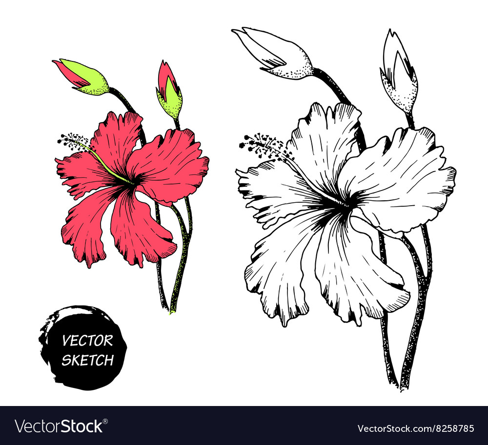 Tropical flowers in sketch a vector