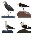 Set of sea birds vector image