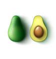 whole and half cut avocado vector image