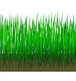 grass with earth vector image vector image