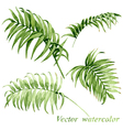 Palm leaves set vector image