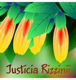 Beautiful spring flowers Justicia rizzinii Cards vector image