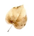 Autumn leaf isolated on white background vector image vector image