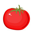 tomato isolated single simple cartoon vector image