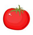 tomato isolated single simple cartoon vector image