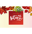 hello autumn sale background vector image