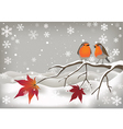 Pair of Robins vector image