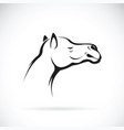 camel head on white background wild animals vector image