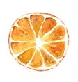 Slice of orange isolated on white background vector image vector image