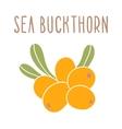 Sea buckthorn superfood vector image