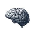 human brain casting shadow vector image